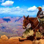 Muilezeltocht Grand Canyon Verenigde Staten
